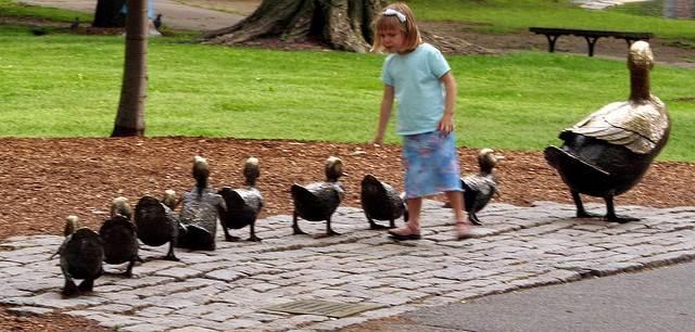 보스톤 시민공원의 아기 오리들
