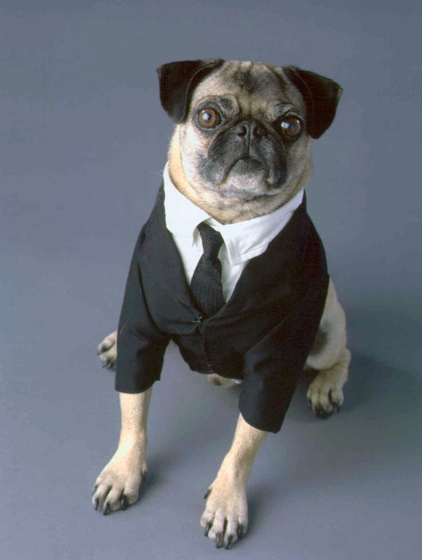 frank_the_pug_mushu_from_men_in_black