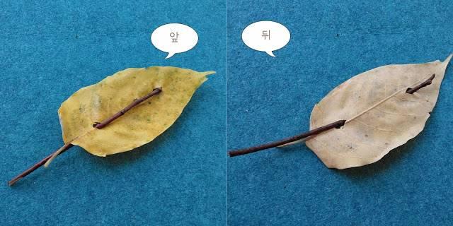 나뭇잎배 만들기