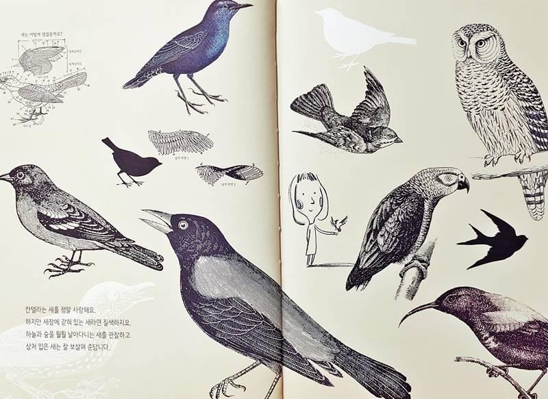 새가 되고 싶은 날